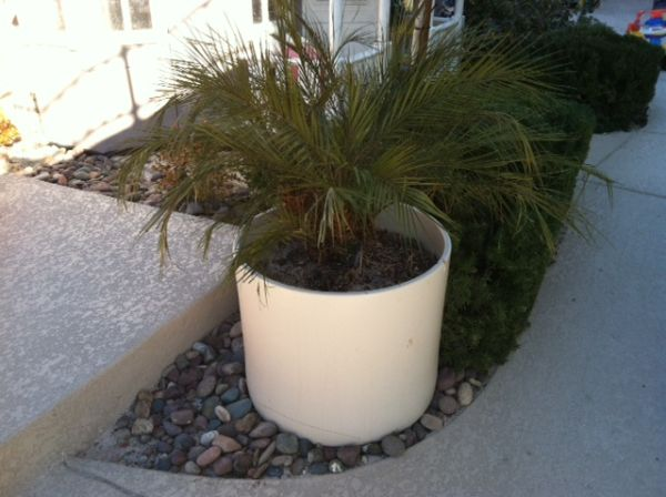 Beautiful potted plant - $20 (Summerlin)