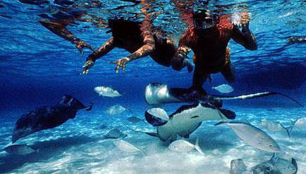 7 day vacation to the bahamas cruise line and more, more info below - $700 (United States)