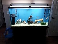 75 Gallon FISH tank w Black stand More - $350 (Lake Havasu City Az)