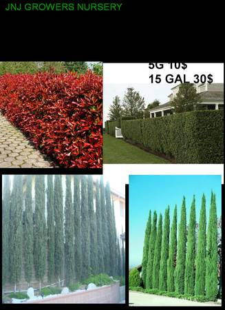 MAKE A LIVING PRIVACY WALL PRIVACY HEDGE PLANTS - $8 (OC DELIVERY)