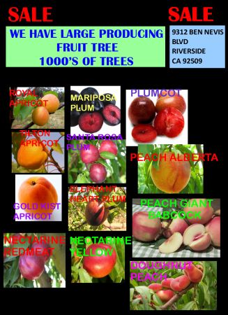 HUGE FRUIT TREES SALE - $50 (OC DELIVERY)