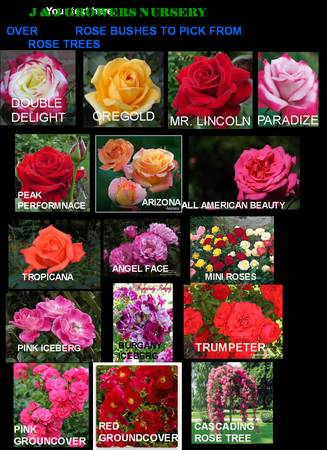 (((((((( ROSES ON SALE )))))))) ROSE TREES SALE 50 OFF - $12 (OC DELIVERY)