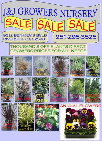 LANDSCAPE PLANTS SALE NURSERY DIRECT - $3 (OC DELIVERY)