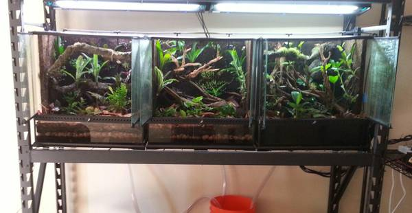 Three EXO TERRA TERRARIUMS ALL PLANTED 4 POISON DART FROGS- - $850 (PALM SPRINGS )