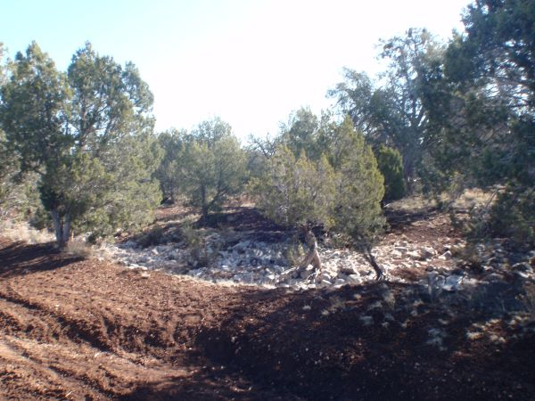 - $84900 Owner Will Carry 160 Acres Wooded Land Between Flagstaff and Kingman (Seligman Arizona)
