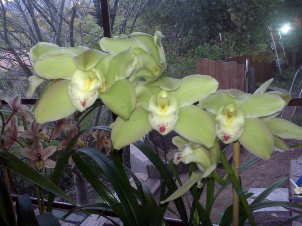 Orchid Love Repotting and more (Santa Barbara area)