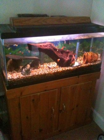 Aquarium 35 20 10 gallon with wood cabinet stand other gear too - $1 (Orcutt)