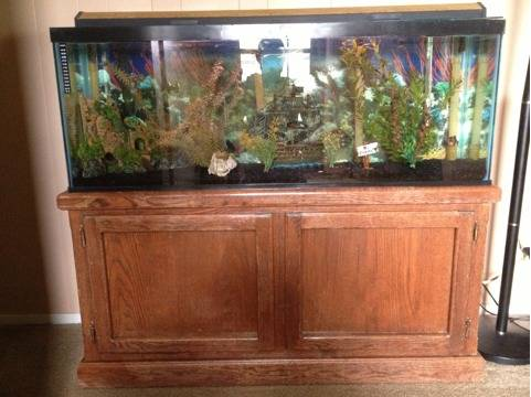 55 gallon fish tank Complete REALLY good deal - $350 (Lodi ca)