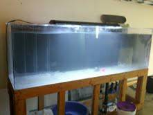 300 gallon acrylic fish tank for sale moving next week (Ventura)
